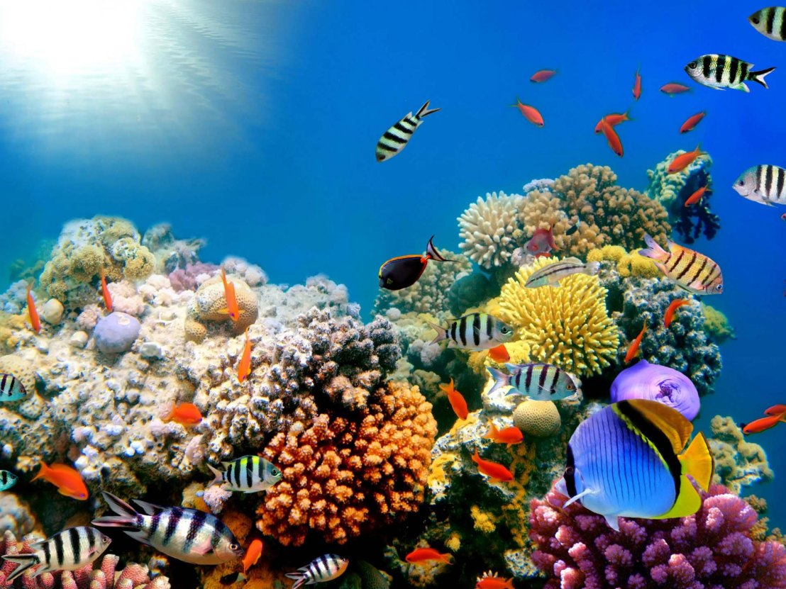 Habilis Want Ask: If Coral Reef No Grow in Muddy Water, How Reef Survive Noah's Flood?